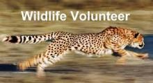 wildlife_volunt